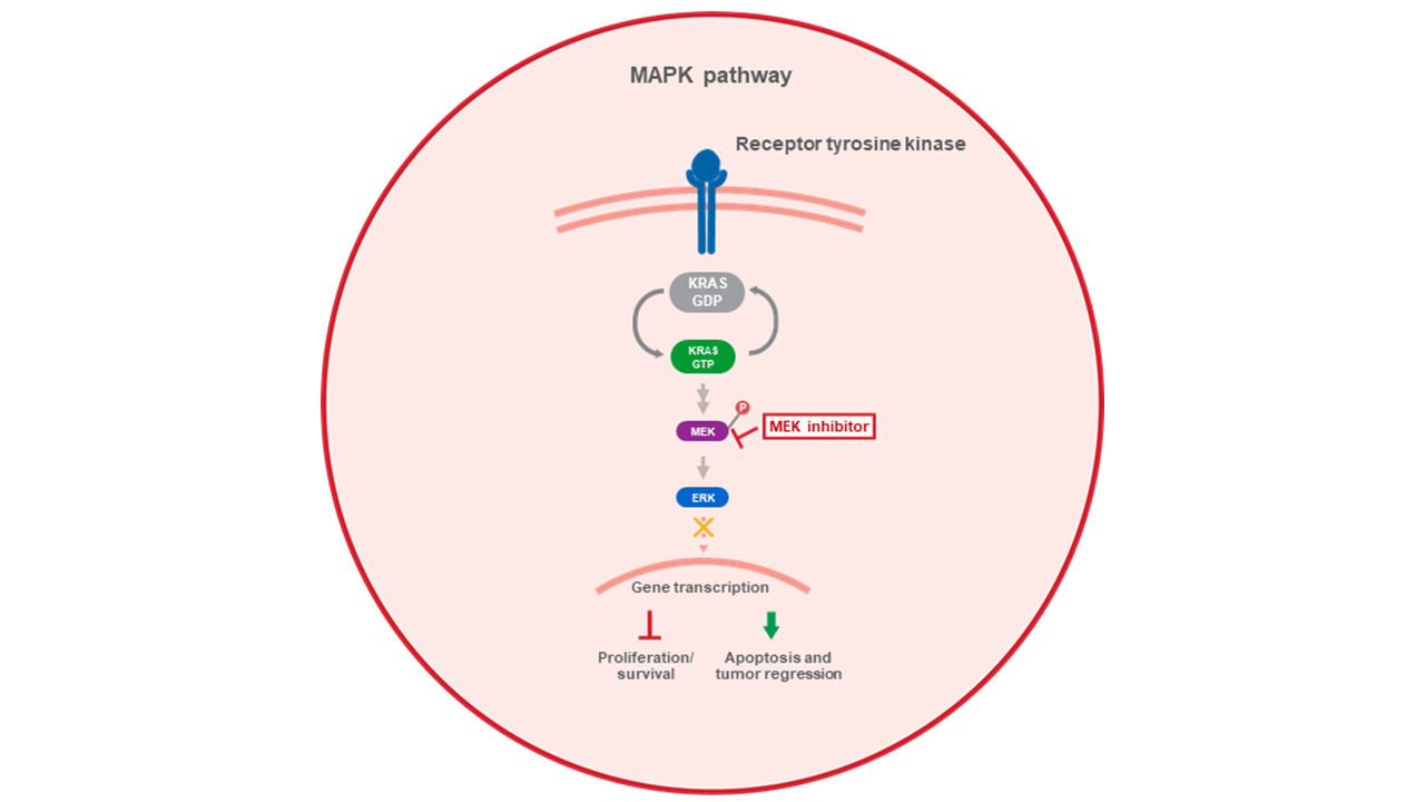 MEK inhibitor mechanism of action