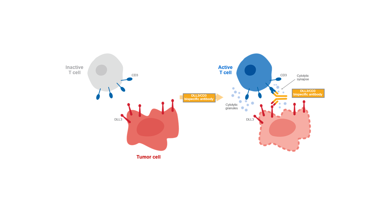 T-cell engager mechanism of action