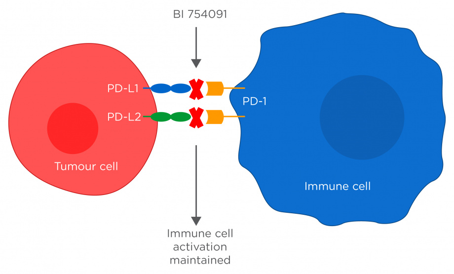 PD-1 mAb mechanism of action