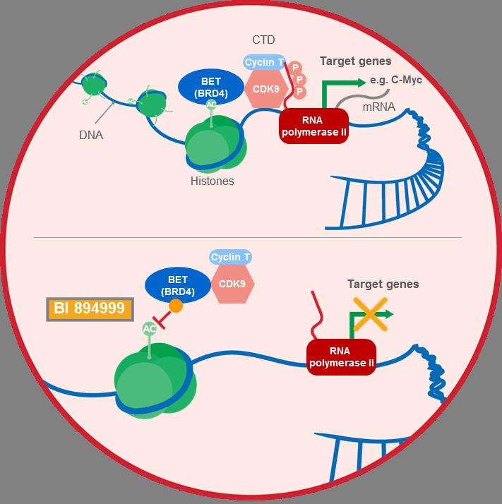 BI 894999 BET inhibitor mechanism of action