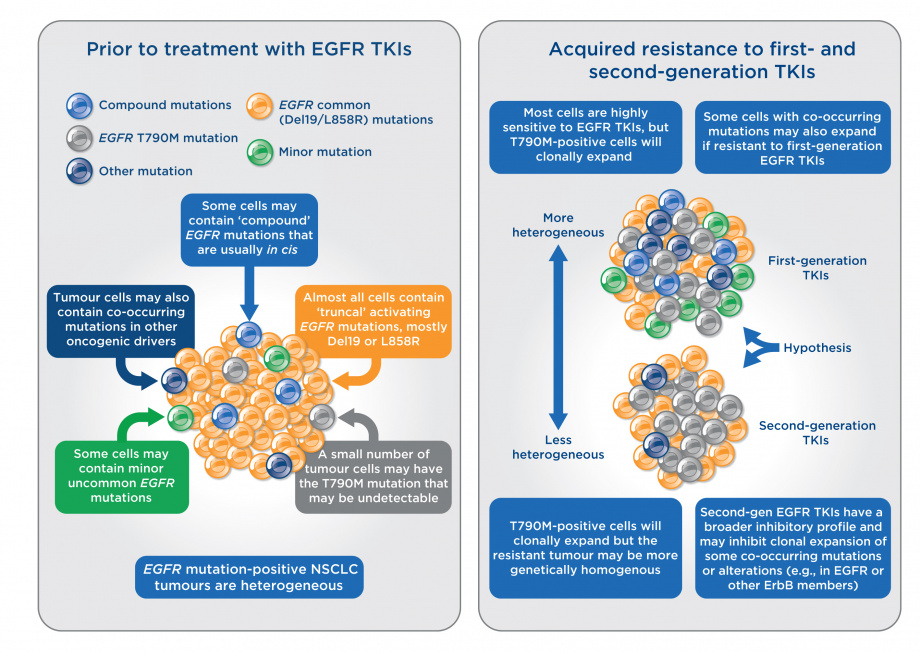 Tumour clonality and resistance mechanisms in EGFR mutation-positive NSCLC