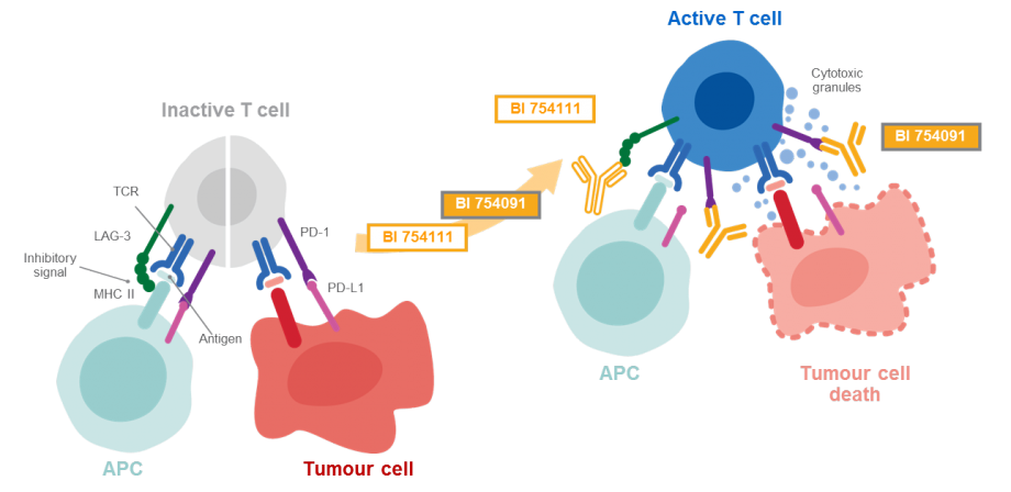 LAG-3 inhibitor mechanism of action
