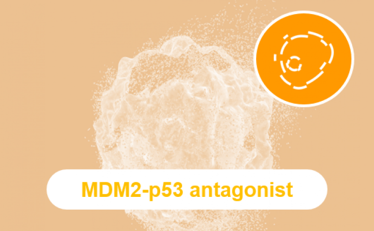 Our investigational MDM2-p53 antagonist