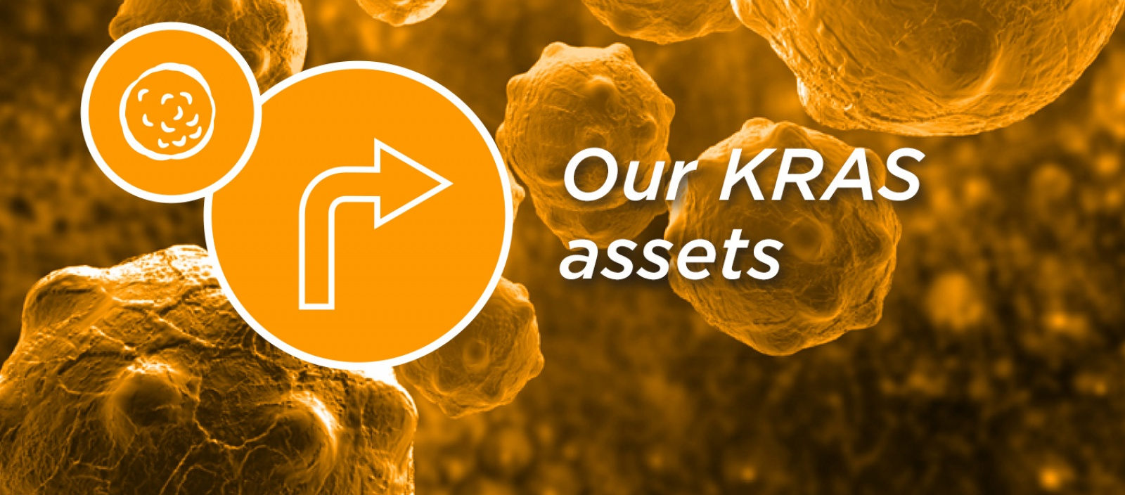 Our KRAS assets