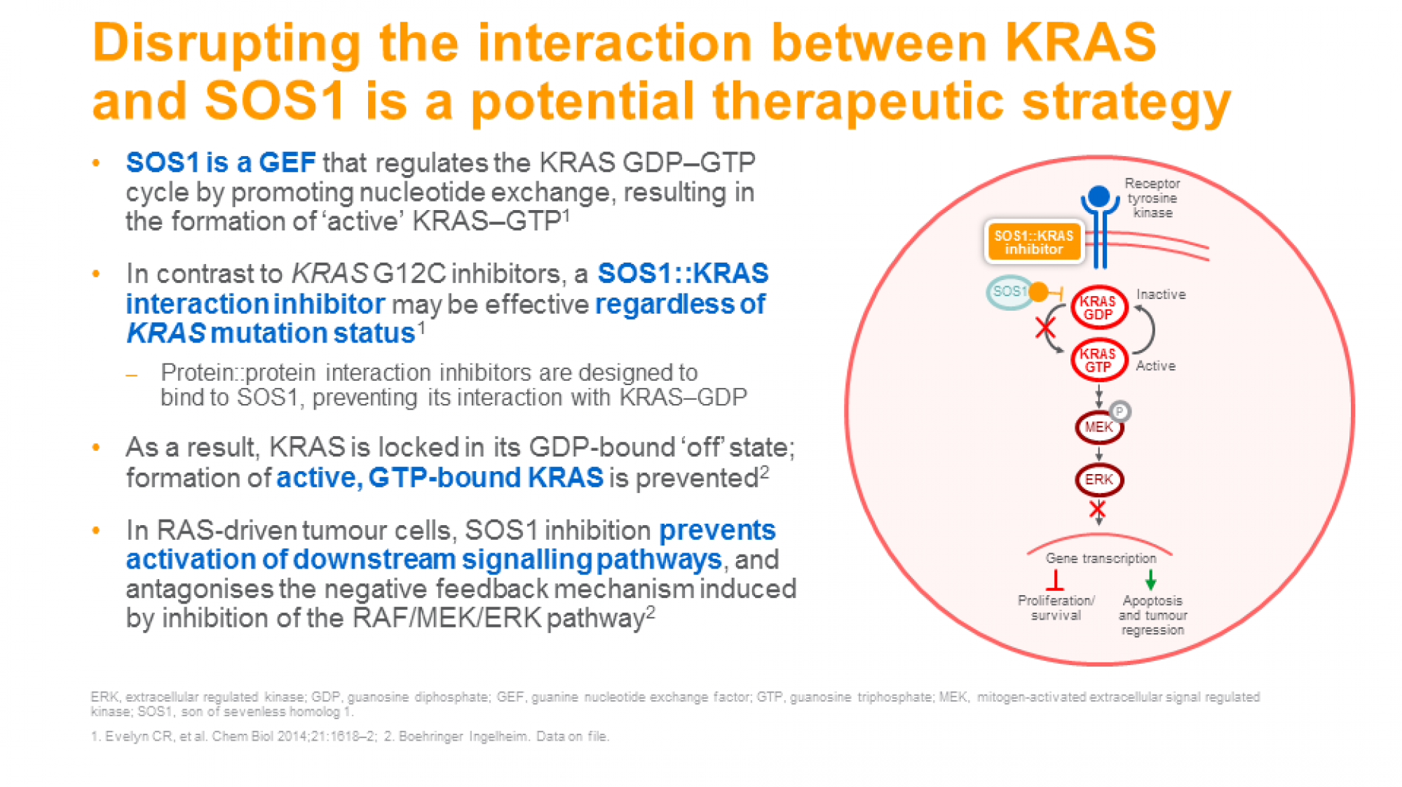 targeting_KRAS_slide12.png