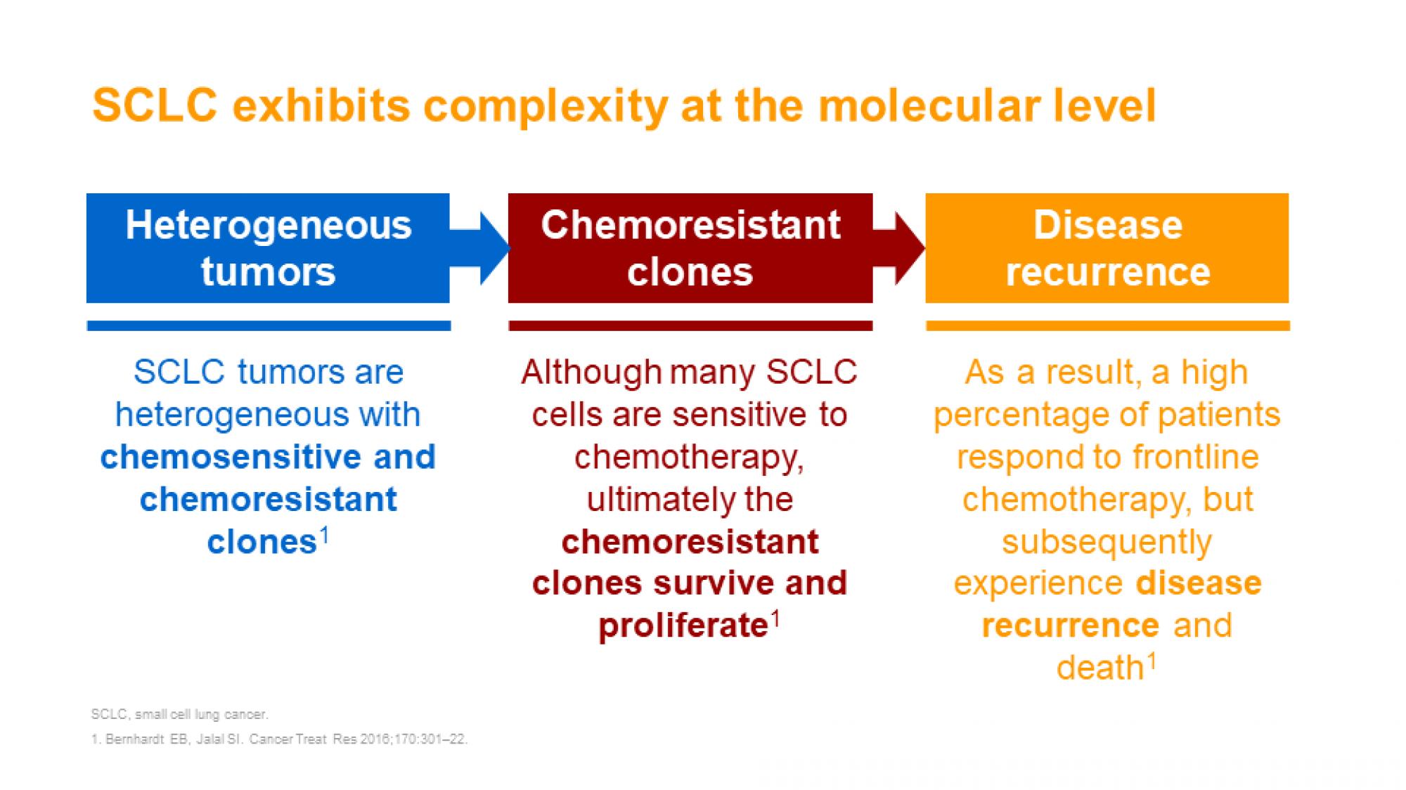 SCLC slide 15